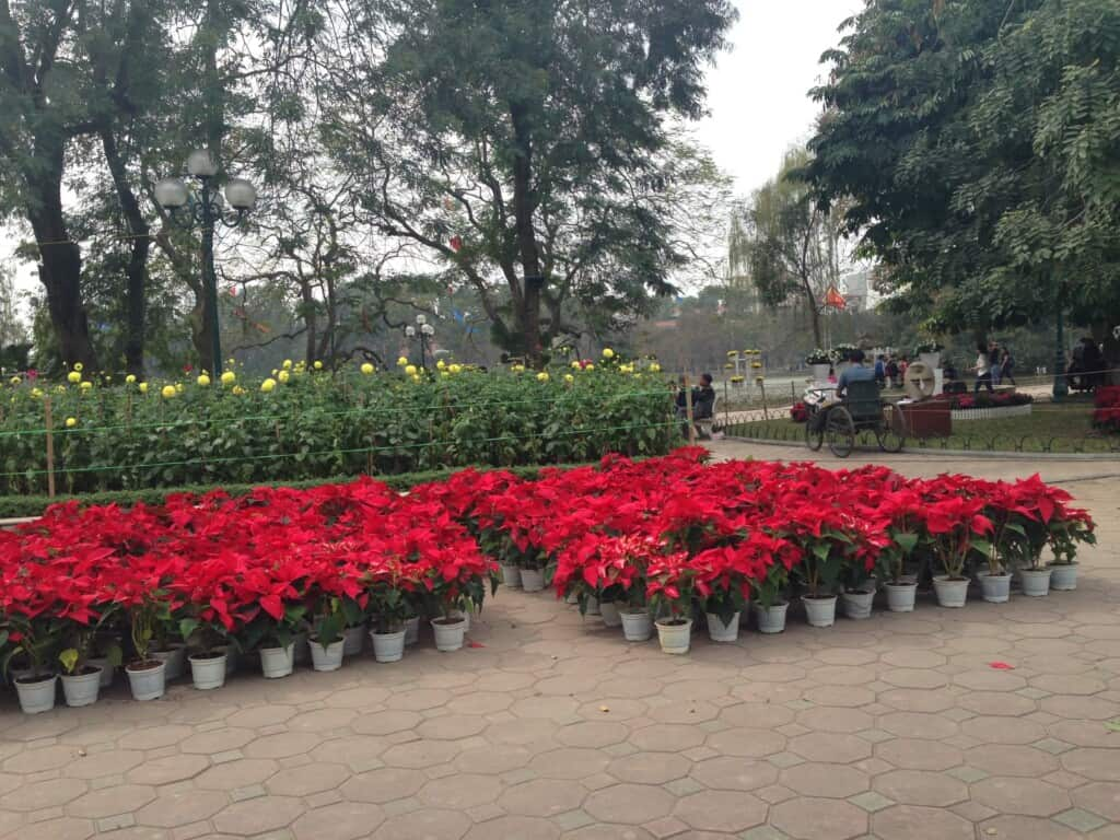 Flowers in Hanoi for Sale Before TET (Lunar New Year)